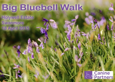 Bluebell Walk 001