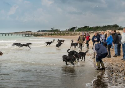 Flatcoat_Climping_006