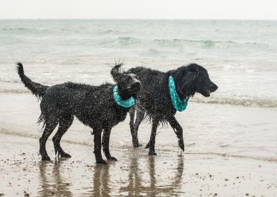 Flatcoat_Climping_038